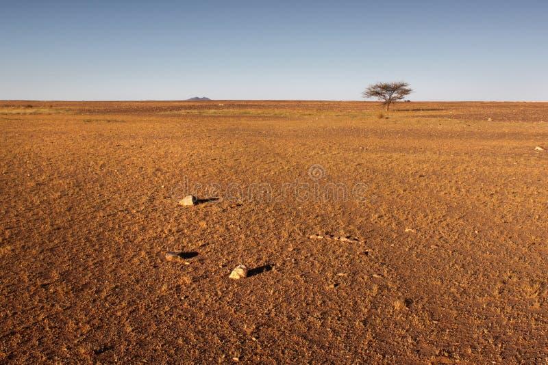 Samotny Pustynny drzewo fotografia stock