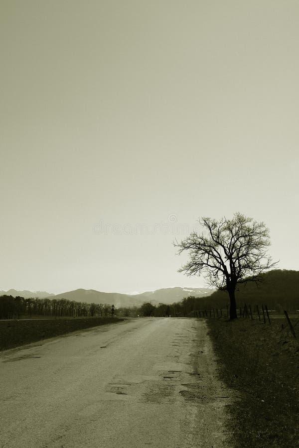 samotny sepiowy drzewo obraz royalty free