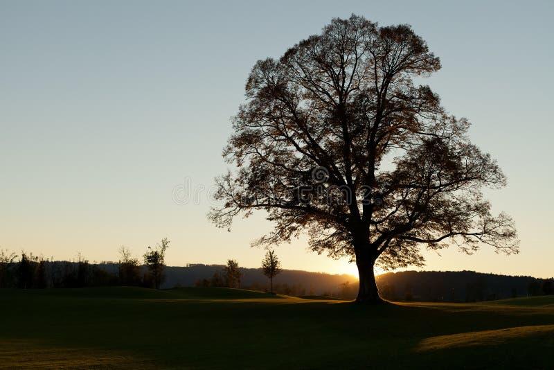 samotny sunrise drzewo fotografia royalty free