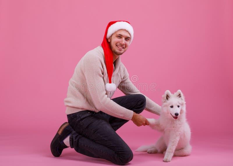Samoyed geeft een poot aan een kerel op een roze achtergrond stock afbeeldingen
