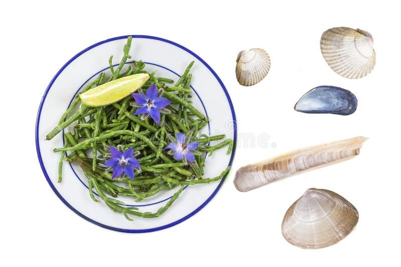 Samphire una hierba costera también conocida como sald de las habas del mar del sallocornia imágenes de archivo libres de regalías