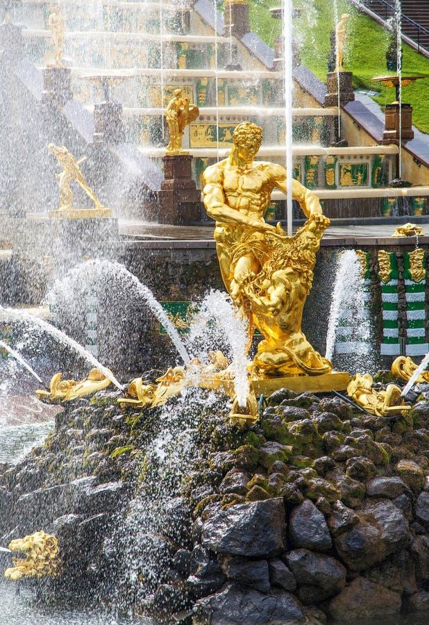 Samson e a fonte do leão na cascata grande de Peterhof, St Petersburg foto de stock