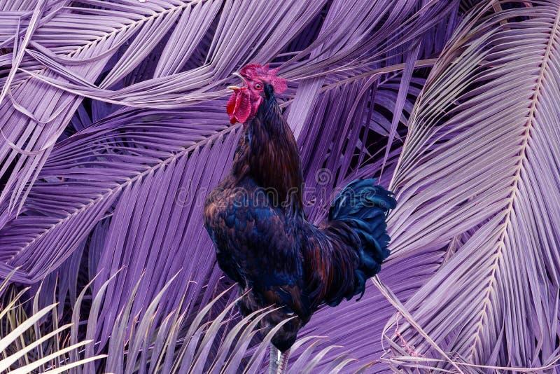Samtida konstcollage som sjunger hanen i purpurfärgad stor palmbladbakgrund Modernt begrepp f?r kultur f?r zine f?r stilpopkonst royaltyfri fotografi