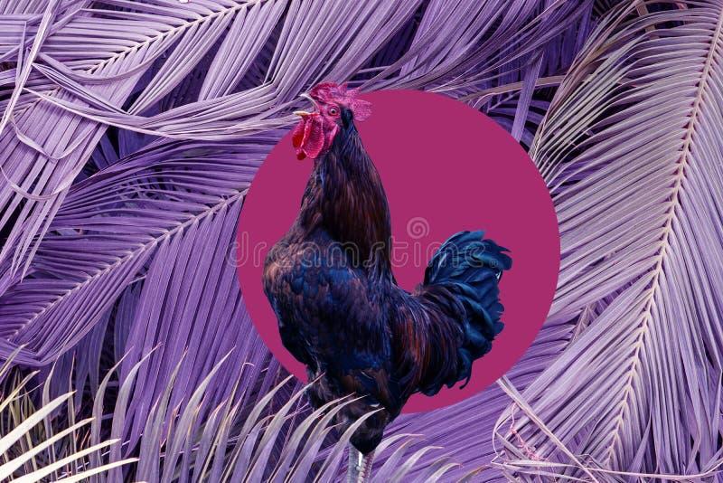 Samtida konstcollage som sjunger hanen i purpurf?rgad stor palmbladbakgrund Modernt begrepp f?r kultur f?r zine f?r stilpopkonst arkivbilder