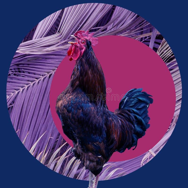 Samtida konstcollage som sjunger hanen i purpurf?rgad stor palmbladbakgrund Modernt begrepp f?r kultur f?r zine f?r stilpopkonst royaltyfria bilder