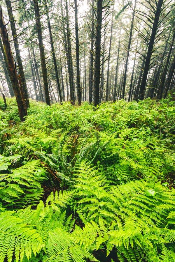 Samuel H Boardman州立公园,俄勒冈,美国西海岸,旅游美国,户外,探险,景观,雨林 库存图片