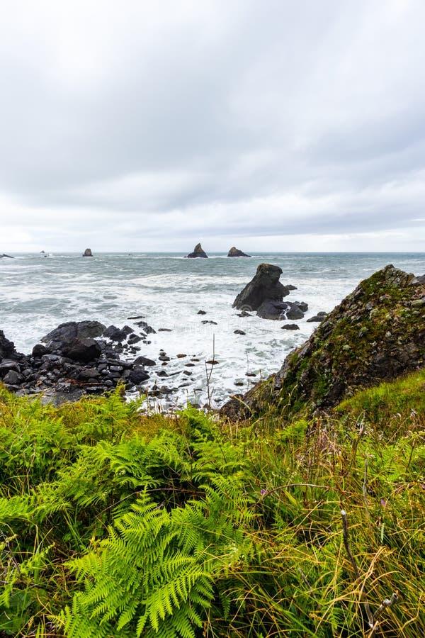 Samuel H Boardman State Park, Oregon, Costa Oeste, Estados Unidos da América, Travel USA, ao ar livre, aventura, paisagem, flores foto de stock royalty free