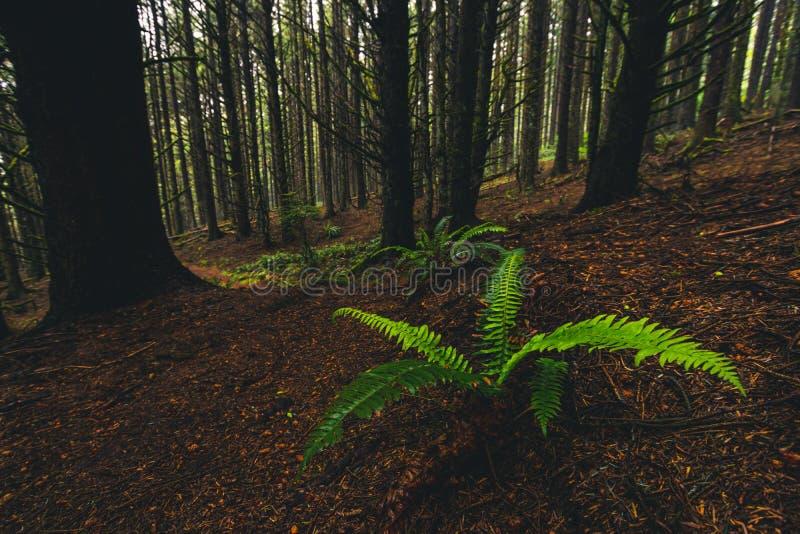 Samuel H Boardman State Park, Oregon, West Coast, Förenta staterna, Travel USA, utomhus, äventyr, landskap, regnskog fotografering för bildbyråer
