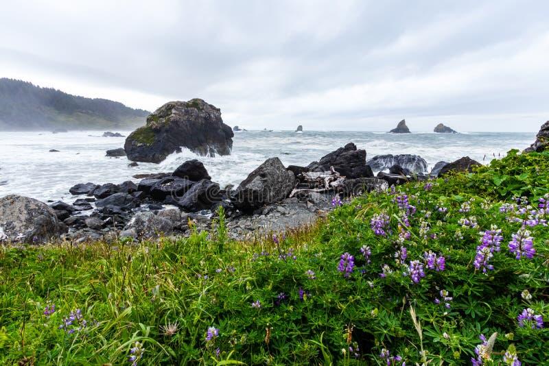 Samuel H Boardman State Park, Oregon, West Coast, Förenta staterna, Travel USA, utomhus, äventyr, landskap, regnskog arkivbild