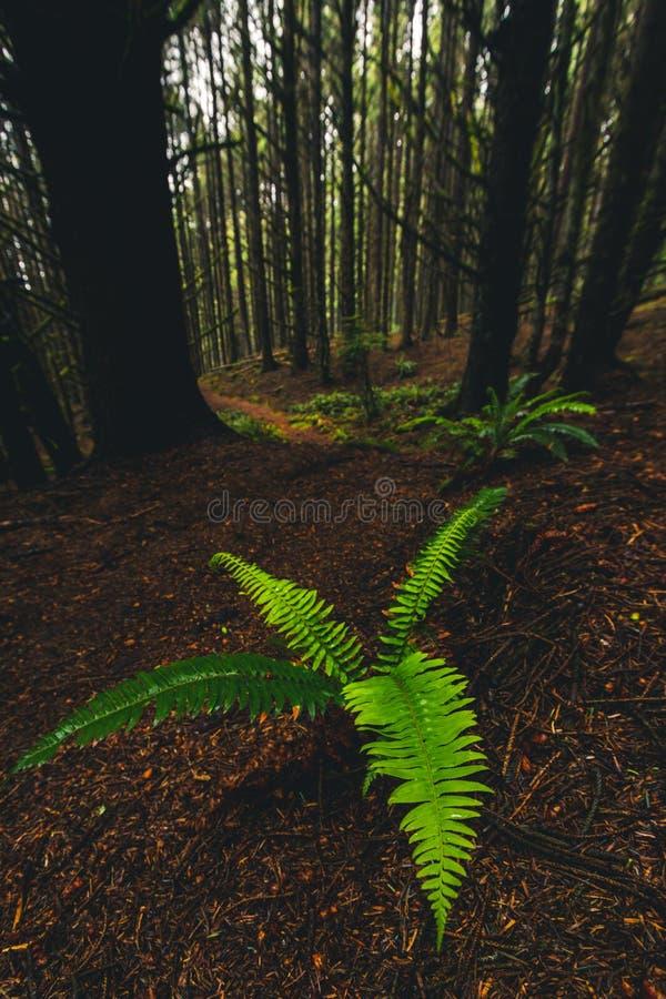 Samuel H Boardman State Park, Oregon, West Coast, Förenta staterna, Travel USA, utomhus, äventyr, landskap, regnskog royaltyfri bild