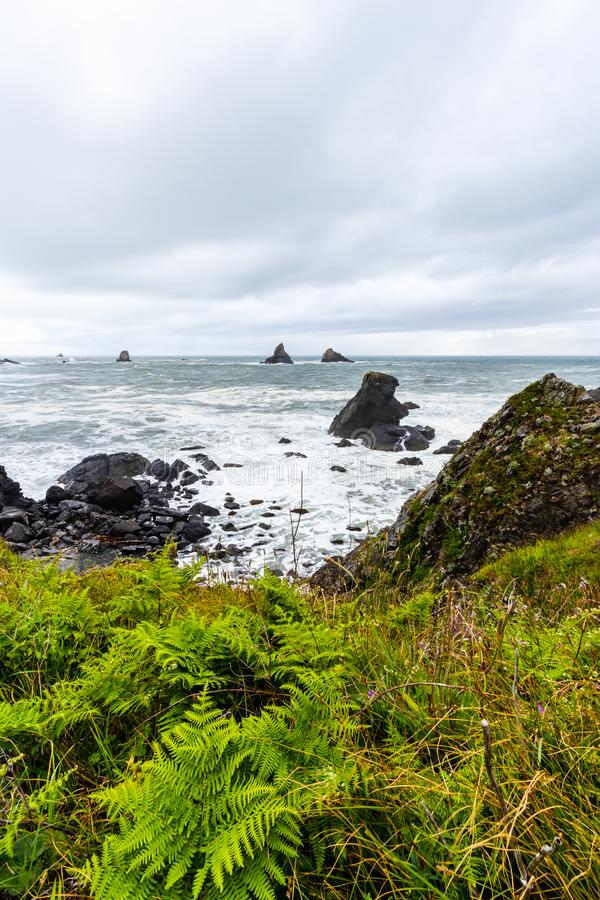 Samuel H Boardman State Park, Oregon, West Coast, Stati Uniti d'America, Travel USA, outdoor, adventure, paesaggio, foresta pluvi fotografia stock libera da diritti