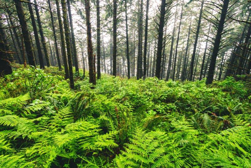 Samuel H Boardman State Park, Oregon, West Coast, Verenigde Staten, Travel USA,, outdoor, avontuur, landschap, regenwoud royalty-vrije stock foto's