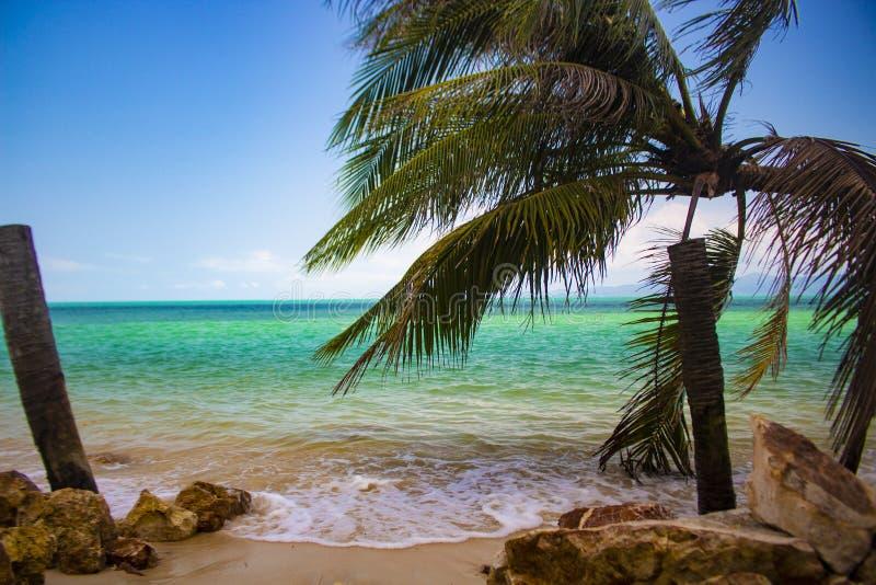 Samui do koh de Tailândia da praia de Paradise imagem de stock
