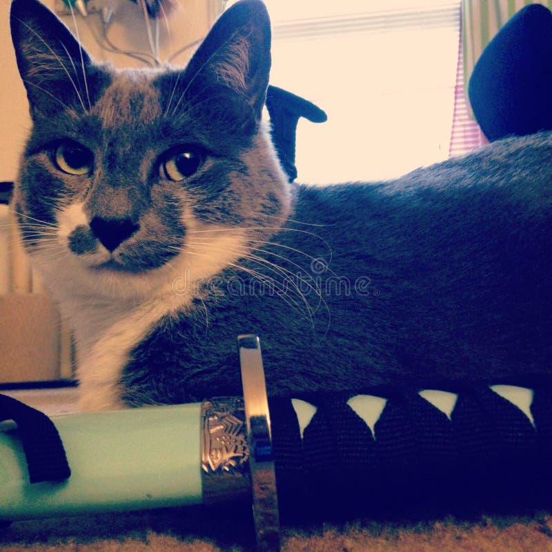 Samurai Cat stock image