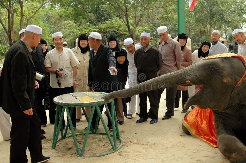 Samut Prakan, Таиланд: Мусульмане наблюдая, как слон показал стоковые фото