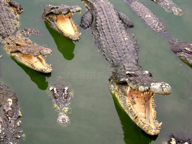 Samutprakan Crocodile Farm and Zoo stock photography