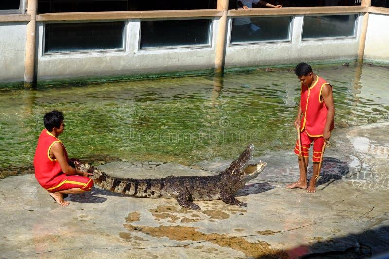 ` SAMUTPRAKARN `,泰国- 2016年12月25日:它是鳄鱼展示在2016年12月25日的农场在Samutprakarn,泰国 免版税库存图片