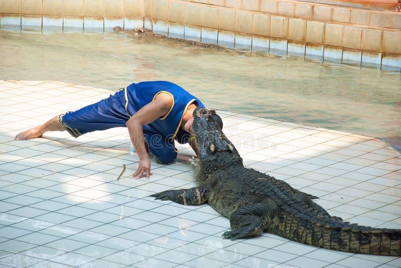 SAMUTPRAKARN THAILAND: Krokodilshow och manupphetsa och fara på krokodilzoo arkivbilder