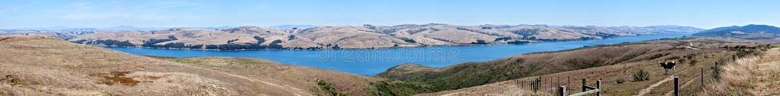 San Andreas Fault. Cow looking at San Andreas Fault Zone, where the Pacific plate is moving about 2 inches a year royalty free stock photo
