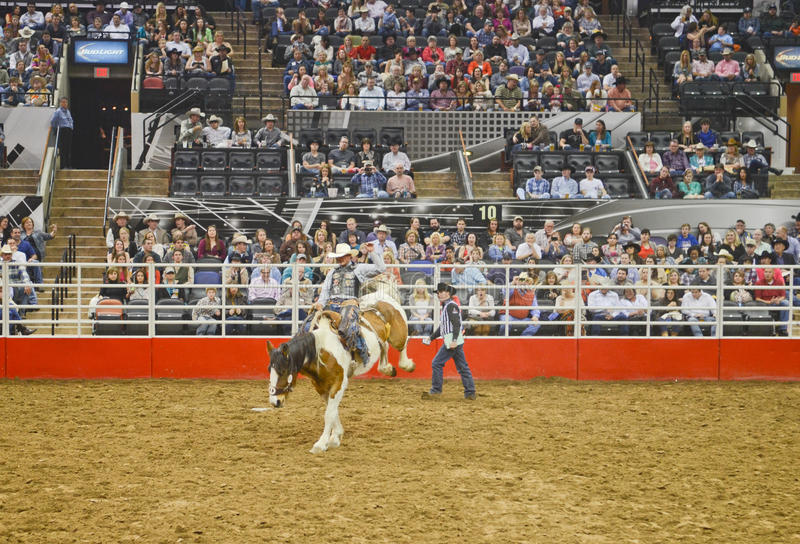 San Antonio Rodeo photos stock
