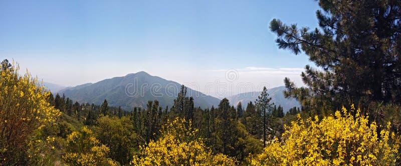 San Bernardino National Forest royalty-vrije stock fotografie