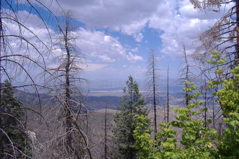 San Catalina Mountain, Tucson, AZ royaltyfria foton