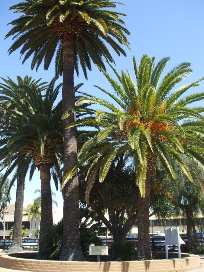 San Diego Californië royalty-vrije stock afbeelding
