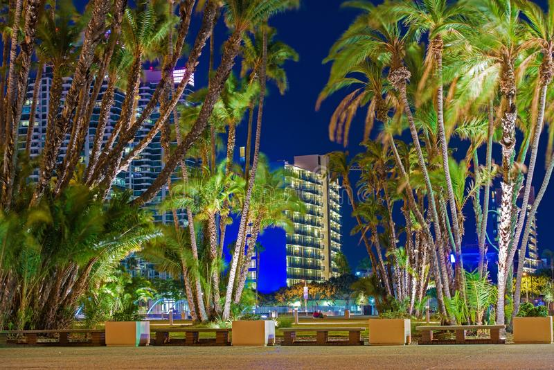 San Diego City Palm Trees stockfotografie
