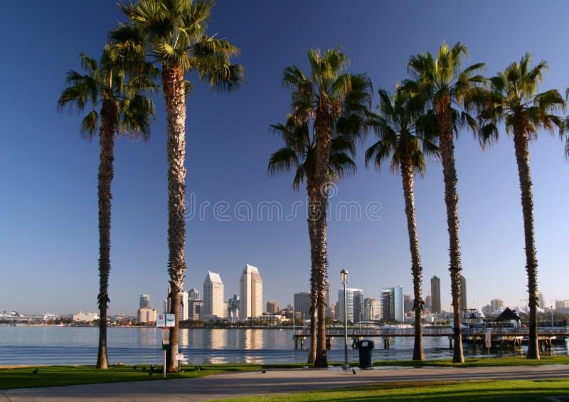San Diego and Coronado Palm Trees royalty free stock photography