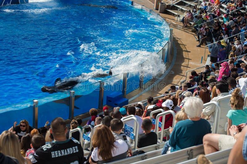 SAN DIEGO, de V.S. - 15 NOVEMBER, 2015 - de orka toont op zee Wereld stock afbeelding