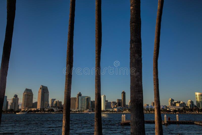San Diego linia horyzontu przez palm na Coronado obraz royalty free