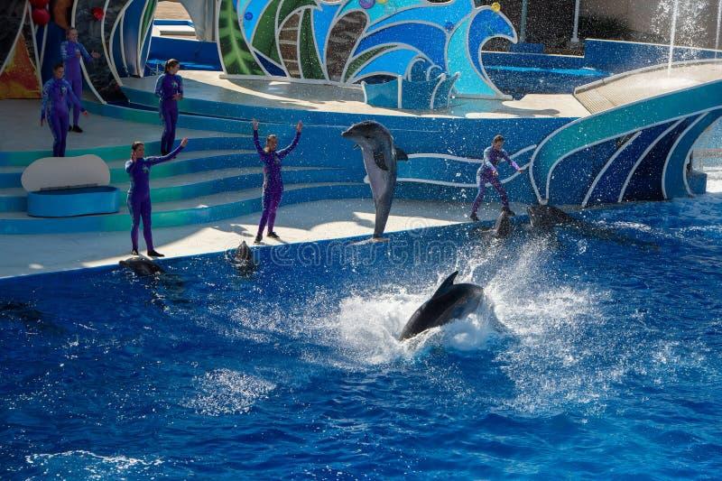 Delfin Show 8