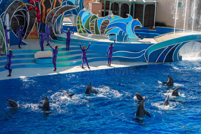 SAN DIEGO, USA - NOVEMBER, 15 2015 - The dolphin show at Sea World. Aquatic park. SeaWorld killer whale died at San Antonio park and all the show were cancelled stock photography