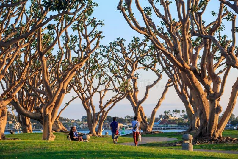 San Diego Waterfront Public Park, marina och Sanen Diego Skyli arkivfoton