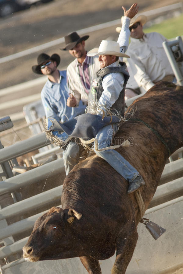 Download San Dimas Bull Riding editorial stock photo. Image of western - 16325198