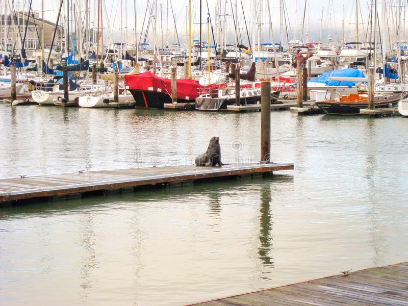 San Francisco Bay photo stock