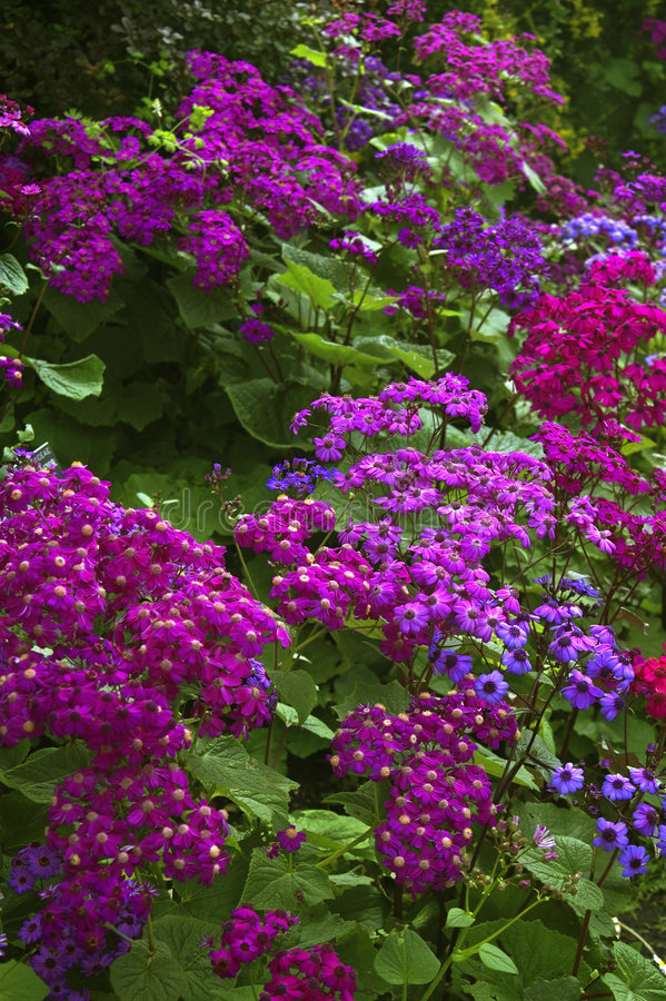 San Francisco botaniczne ogrodu obraz royalty free
