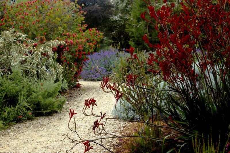 San Francisco botaniczne ogrodu obrazy royalty free