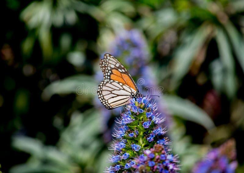 San Francisco Butterfly In Park fotografia de stock