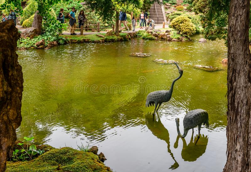 Two cranes in Japanese Tea Garden, San Francisco, CA. royalty free stock images