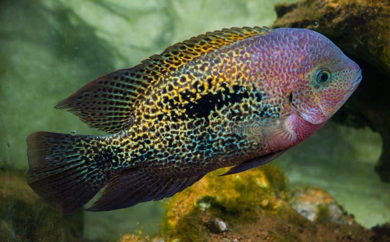 San Francisco Fish In Park imagem de stock