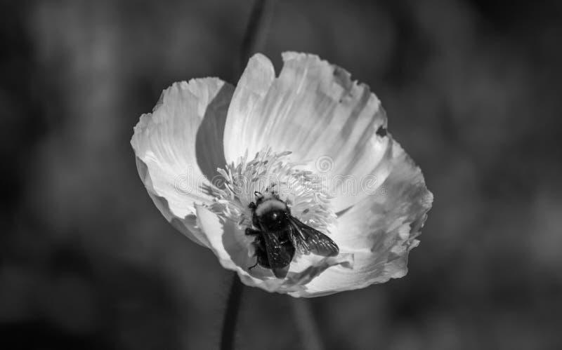 San Francisco Flower no parque imagem de stock royalty free