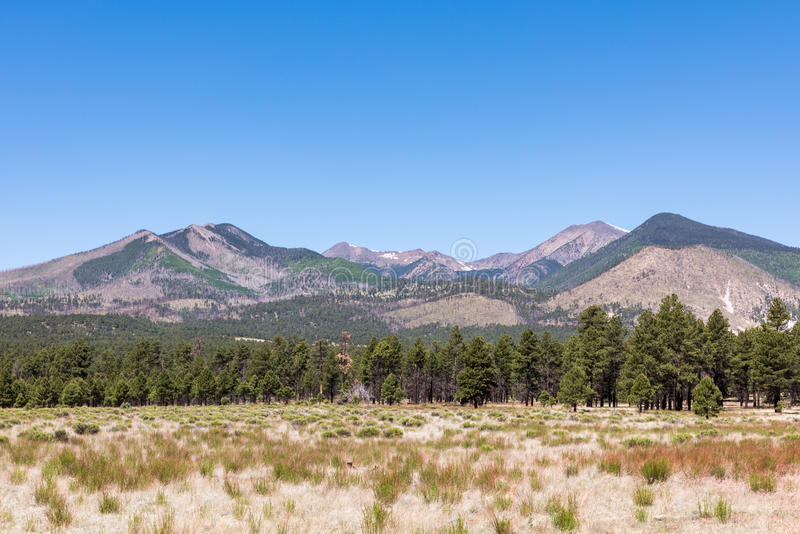 San Francisco Peaks. Panorama of the San Francisco Peaks near Flagstaff in Arizona. Seen from Sunset Crater Volcano National Monument stock image