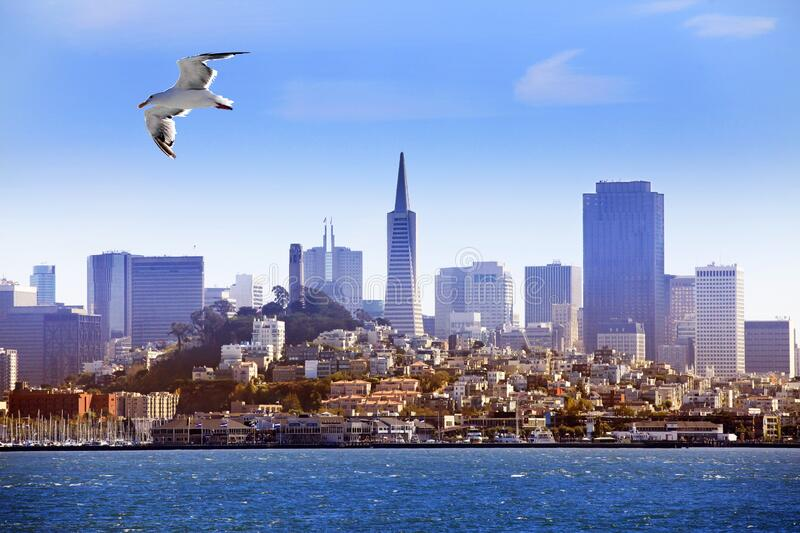Seagull flying over the bay on the background of San Francisco stock image