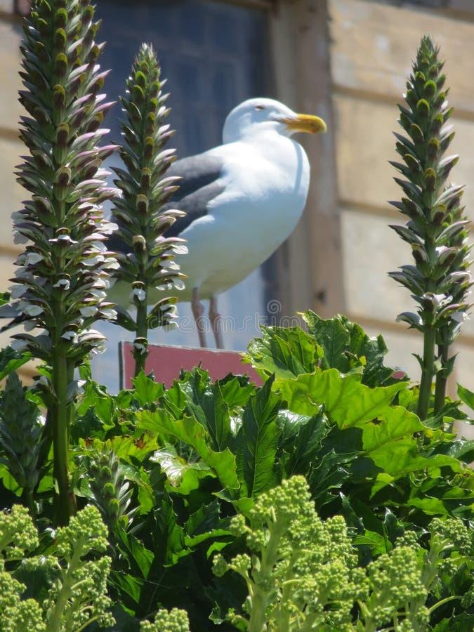 San Francisco Un oiseau gentil dans Alcatraz ; images stock
