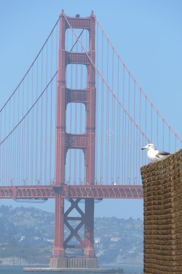 San francisco Uroczy widok Golden Gate Bridge z ptakiem Od piekarz plaży fotografia royalty free