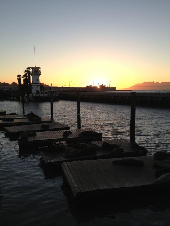 San Francisco zatoki wody widoku dopatrywania foki przy zmierzchem fotografia royalty free
