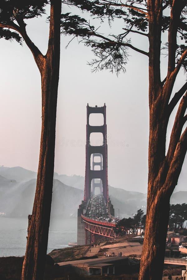San Fransisco, Golden Gate Bridge przez drzew obrazy stock