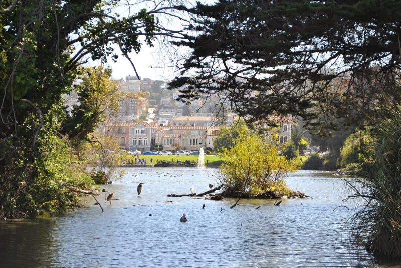 San Fransisco natury życie zdjęcie royalty free