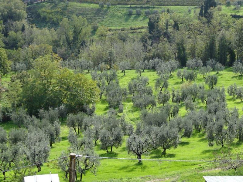 San-gimigano royalty-vrije stock afbeeldingen